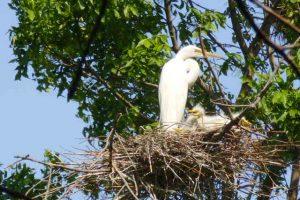 Chantry Island - Federal Migratory Bird Sanctuary